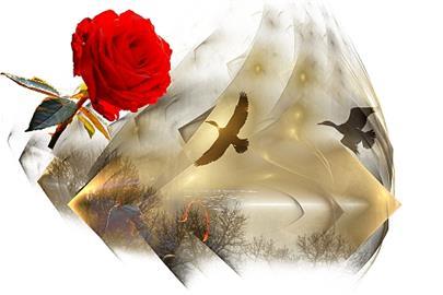 Poslední růže léta