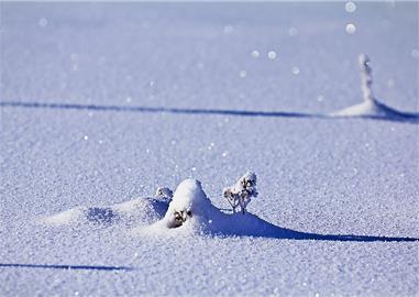 Stopy stínů na sněhu,  Čechy